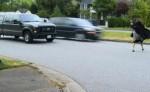 Pedestrian Safety 002